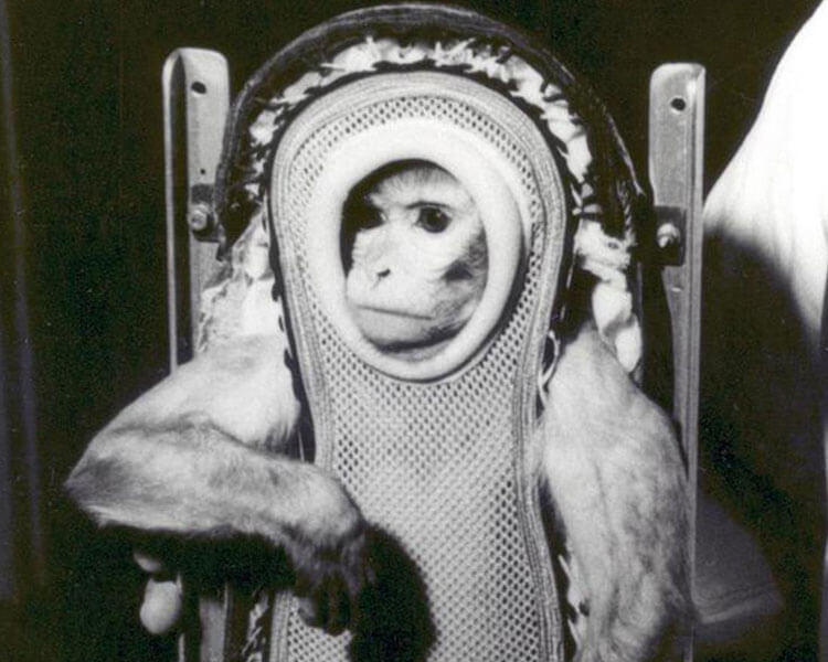 albert II, the first monkey in space