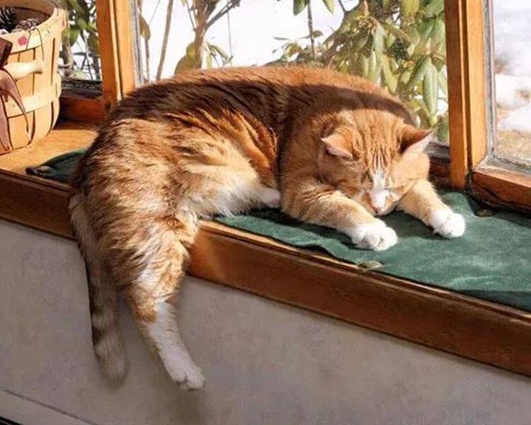 an old cat sleeping near the window