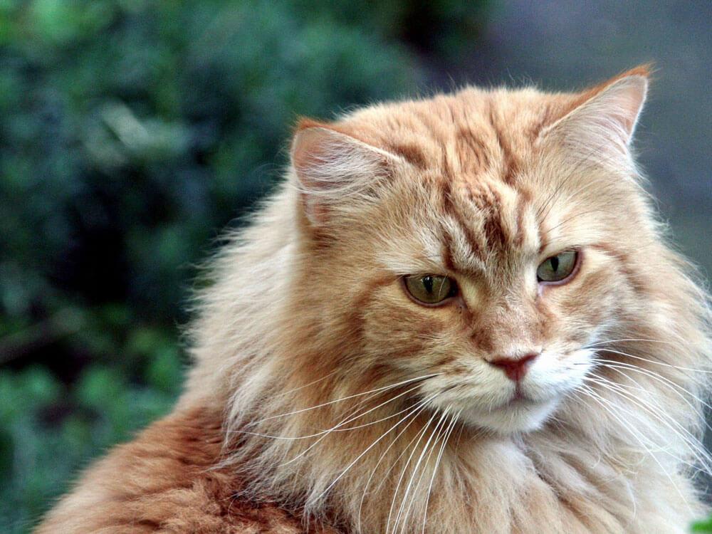 cat tips to live longer
