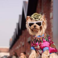 Glammed-Up Pets Strut in New York Pet Fashion Show 2019