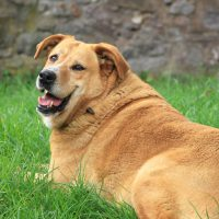 WANTED: Plump Pets for PDSA Pet Slimming Competition