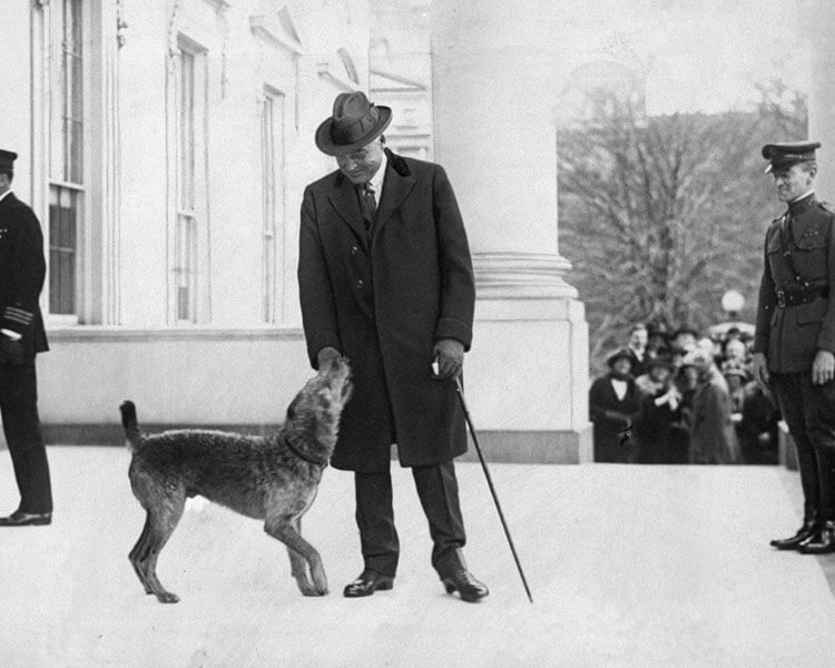 President Warren G. Warding with his Airdale Terrier dog, Laddie Boy in the white house