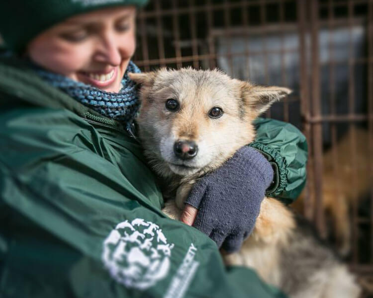 one of the rescued dogs from a dog meat farm in south korea