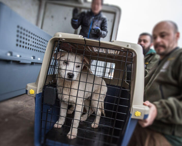 a dog inside a cage rescued from a dog meat and puppy farm in south korea