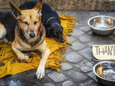 A Glance at the Untold Stories of Street Dogs Belonging to Homeless Owners