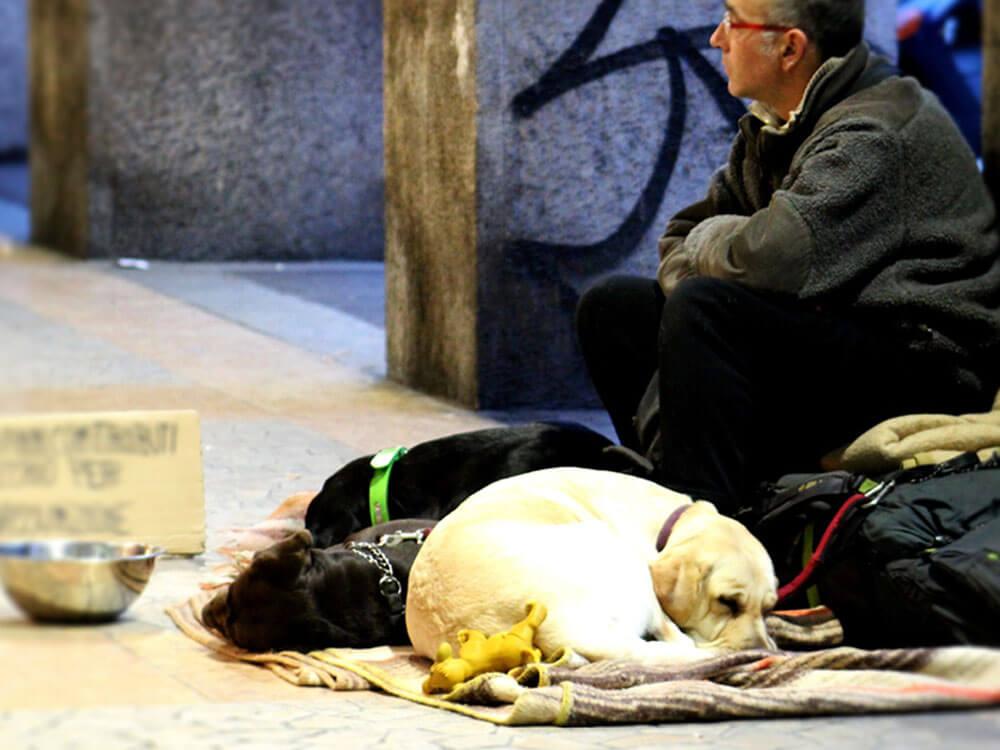 Vet Volunteers Helping Street Dogs Belonging to Homeless Owners