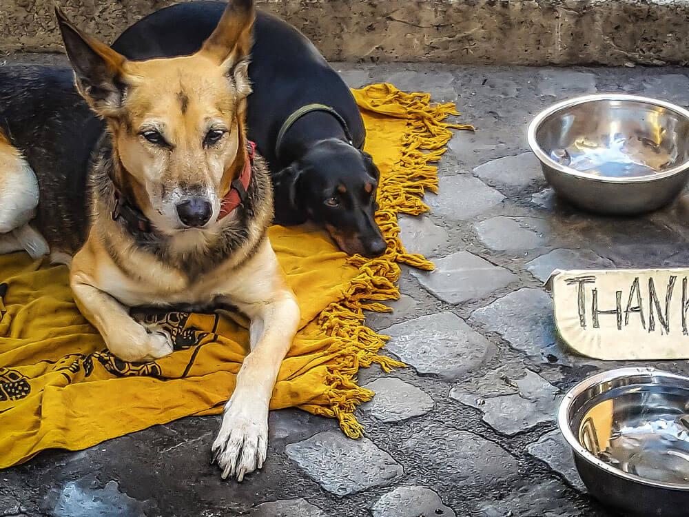 street dogs lying on a thin cloth