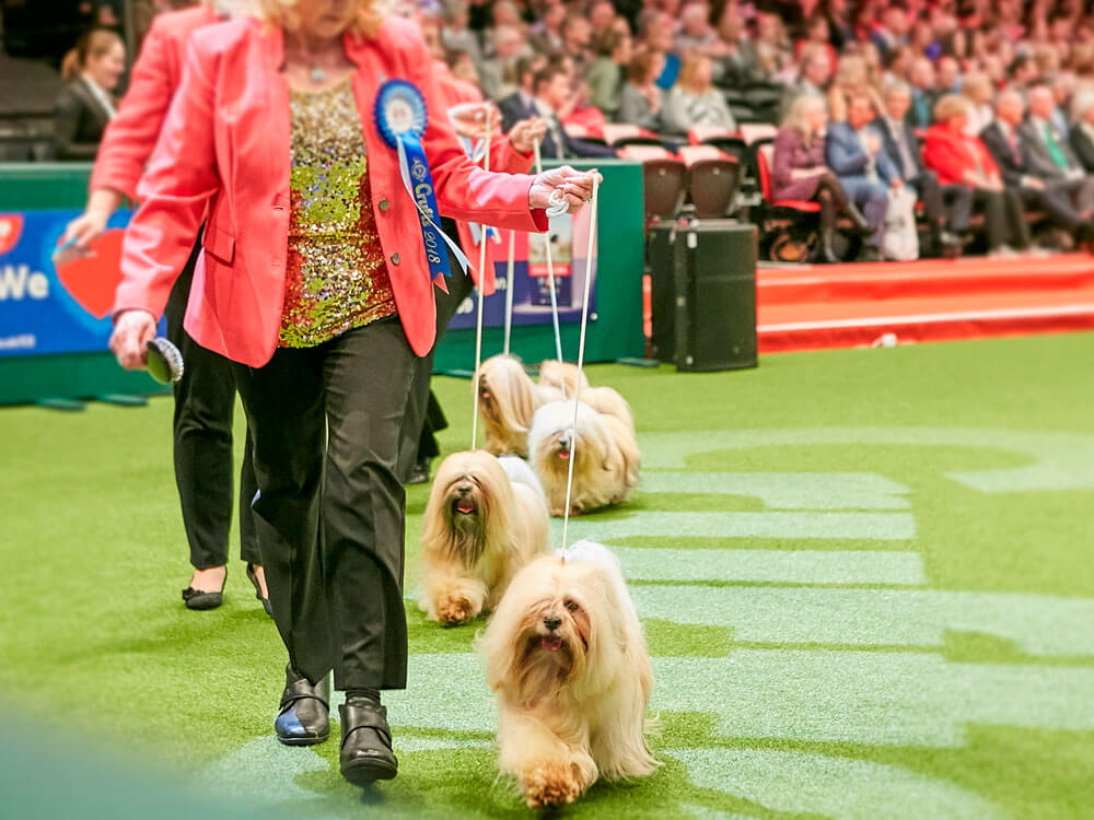 the qualifiers for crufts 2019