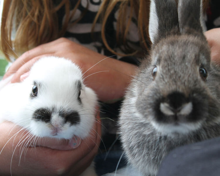 a girl holding two bunnies