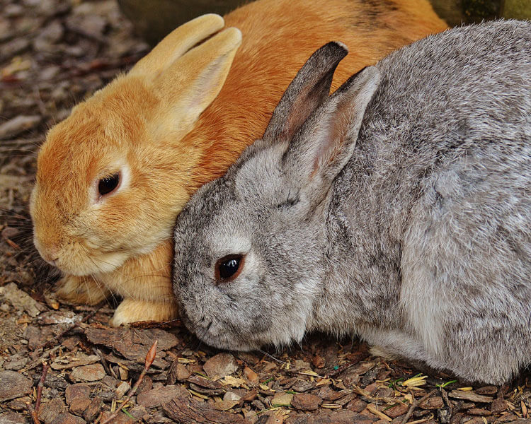 two rabbits behaving