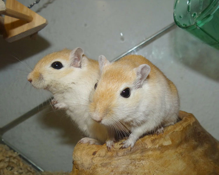 two gerbils standing in a small carved wood