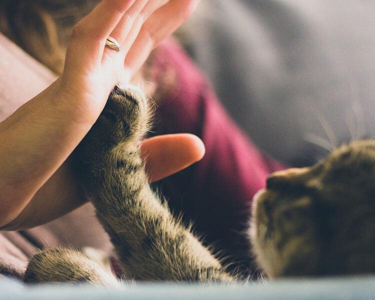 a woman cuddling her pet cat