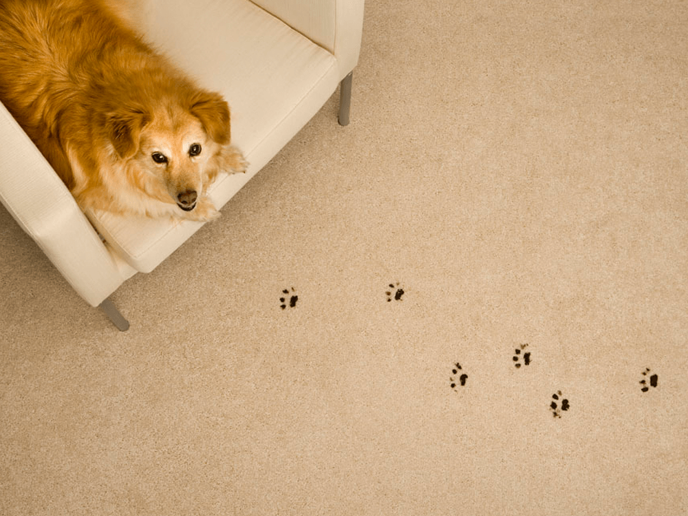 5 tips to keep muddy paw prints outside