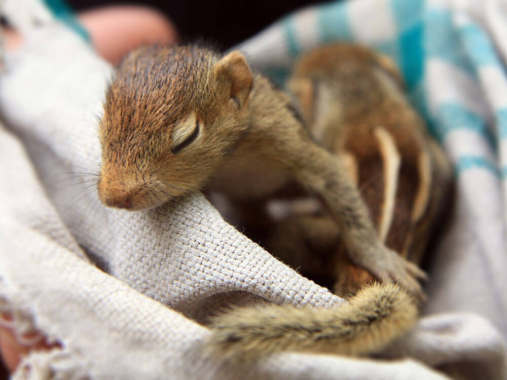 Man Finds a Not-So-Ordinary Baby Squirrel on His Bed