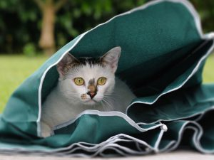 Cat Behaviour Problems and Ways to Correct Them