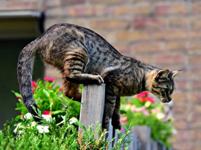 The Physics Behind Cats Falling and Landing Right on Their Feet