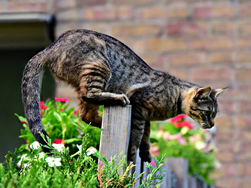 How Do Cats Land on Their Feet?