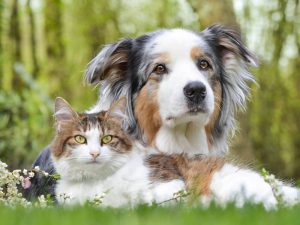 Are You a Dog Person or a Cat Person?