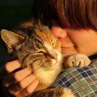 Is Your Behaviour Influencing Your Cat's Behaviour?