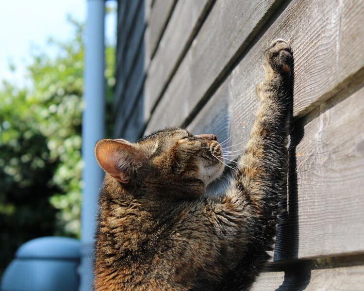 a cat scratching a wall