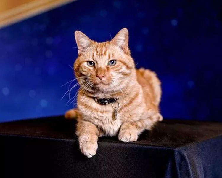 captain marvel's cat, goose, sitting on a table