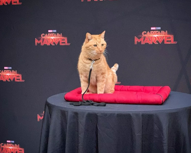 cat Goose in the Captain Marvel movie conference