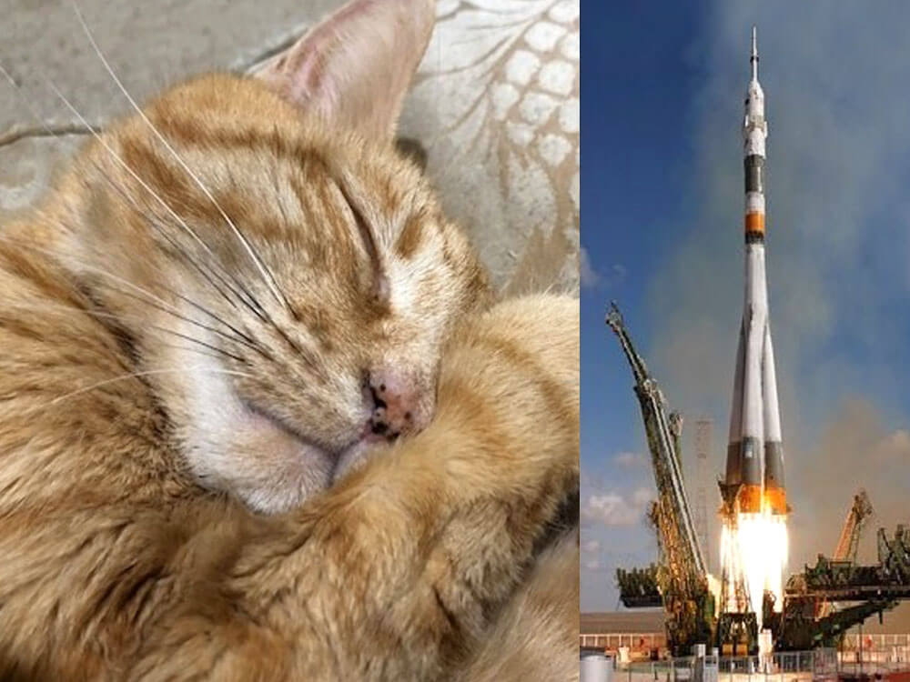 Former NASA Employee Raises Funds to Send Beloved Cat's Ashes to Space