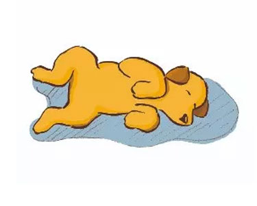 dogs sleeping positions - 11
