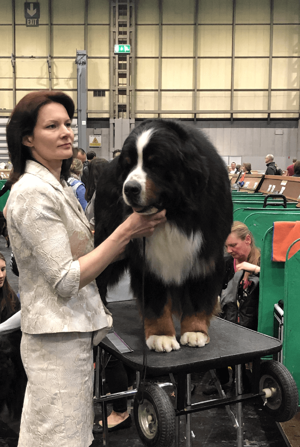 crufts 2019 in pictures and clips 2