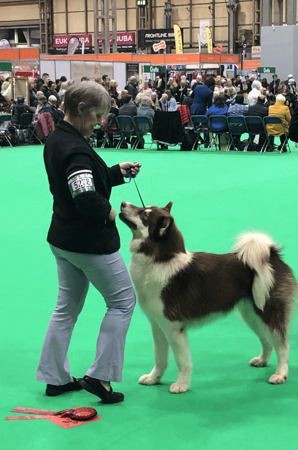 crufts 2019 in pictures and clips 3