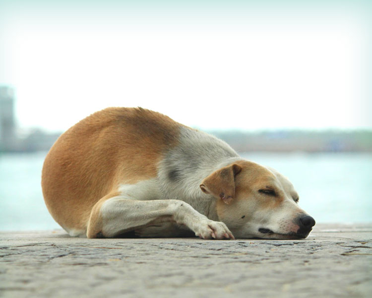 an old dog sleeping on the ground