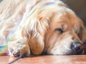Dog Sleeping Positions: Mirrors to Their Thoughts
