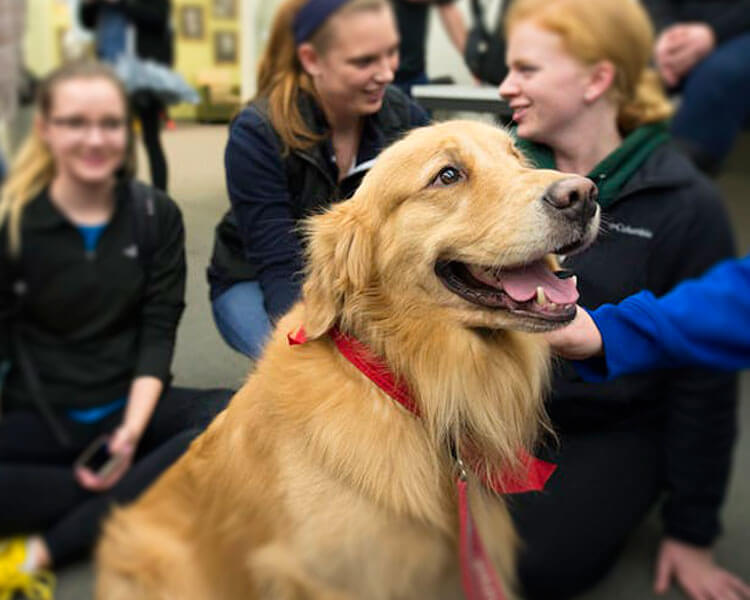 a therapy dog cuddling with the people