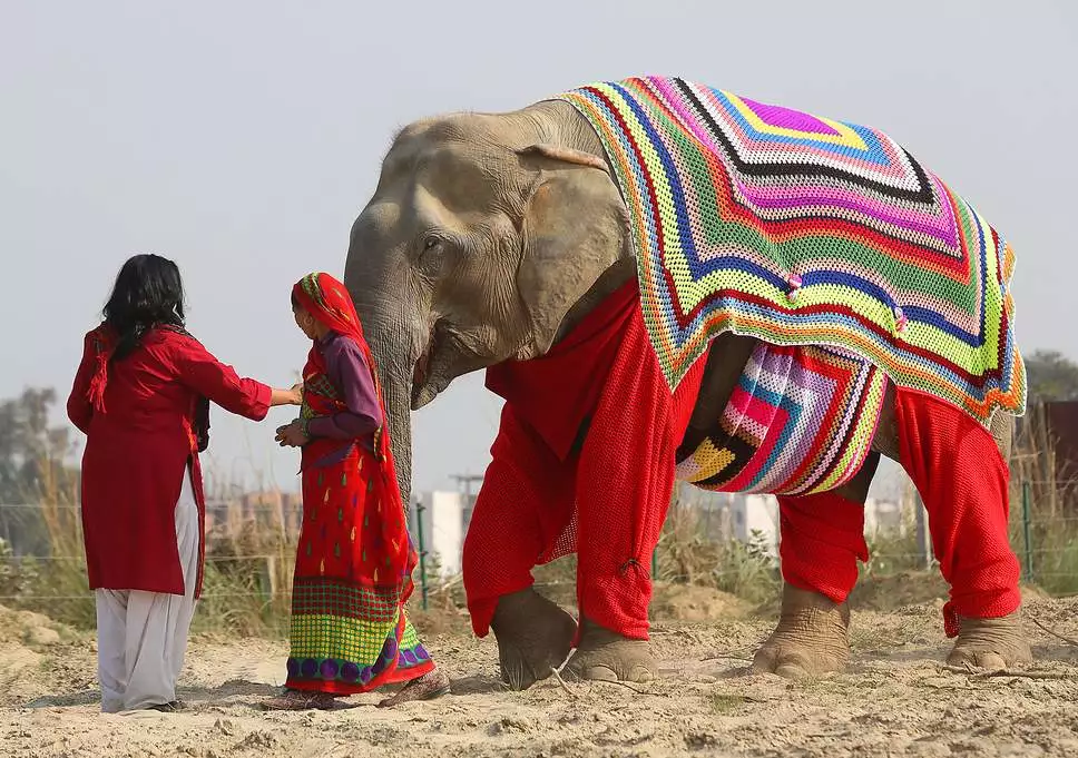 a two woman near a elephant wearing a knitted sweater