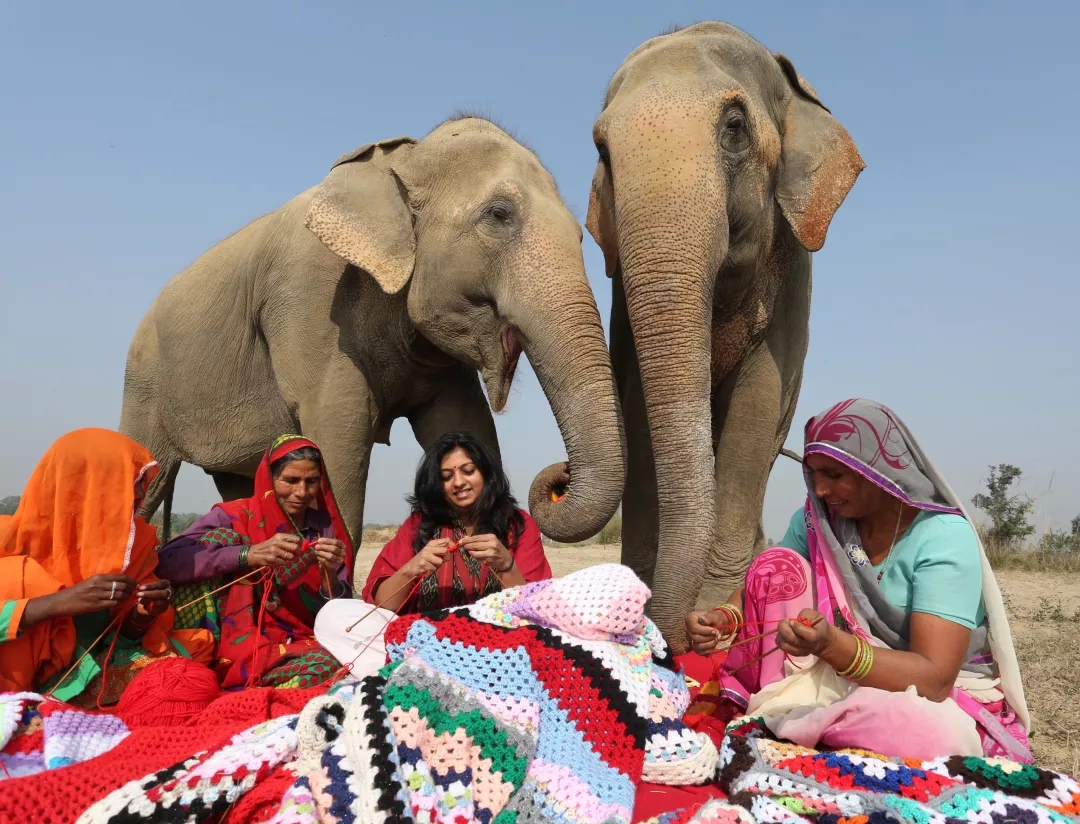 four women knitting large sweaters for the two elephants at their back
