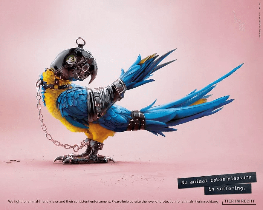 an edited image of a bird in a poster used for anti-animal cruelty campaign