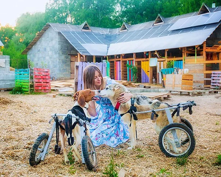 Daria Pushkareva with some of her disabled dogs