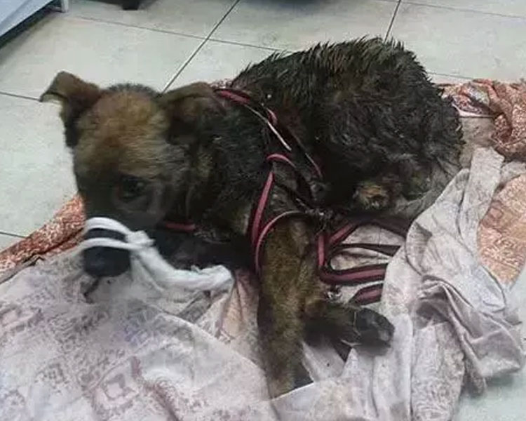 a sick dog which Daria Pushkareva with her husband adopted