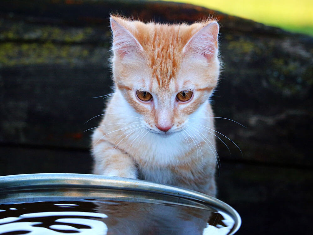 a kitten staring on a big bowl of water