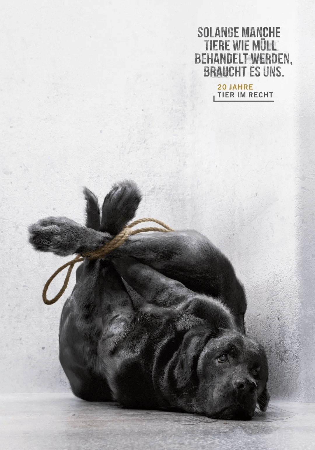 an edited image of a black dog in a poster used for anti-animal cruelty campaign