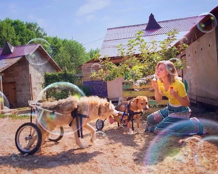 Daria Pushkareva blowing bubbles with her two disabled dogs