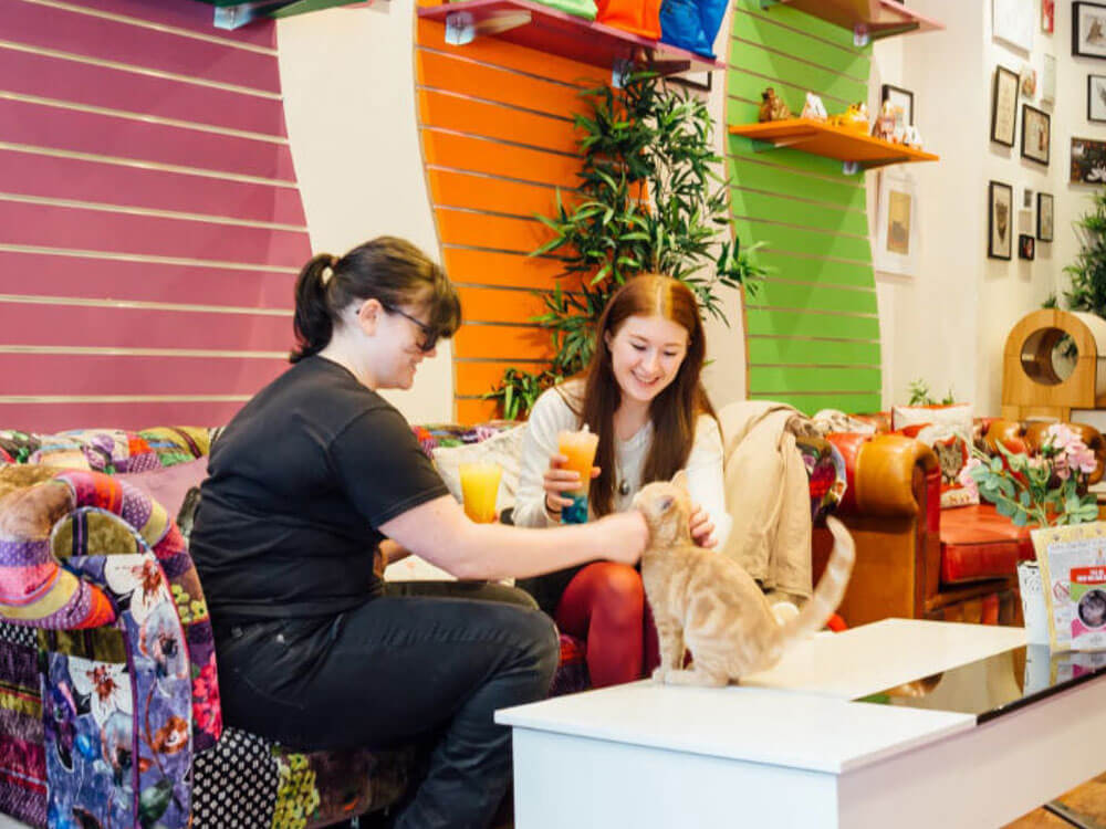 Cat-Tastic Opening of Kitty Café in Birmingham Grand Central