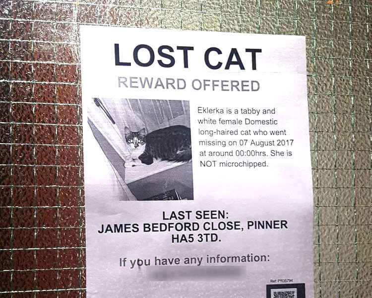 a lost cat flyer posted on the wall