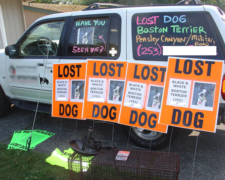 lost pet posters in a car