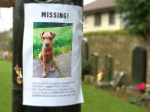 Lost Pet Flyers Can Land You with a £200 Fine