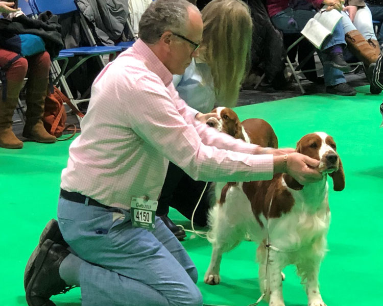 Two dogs are being assessed whilst the competition is in progress