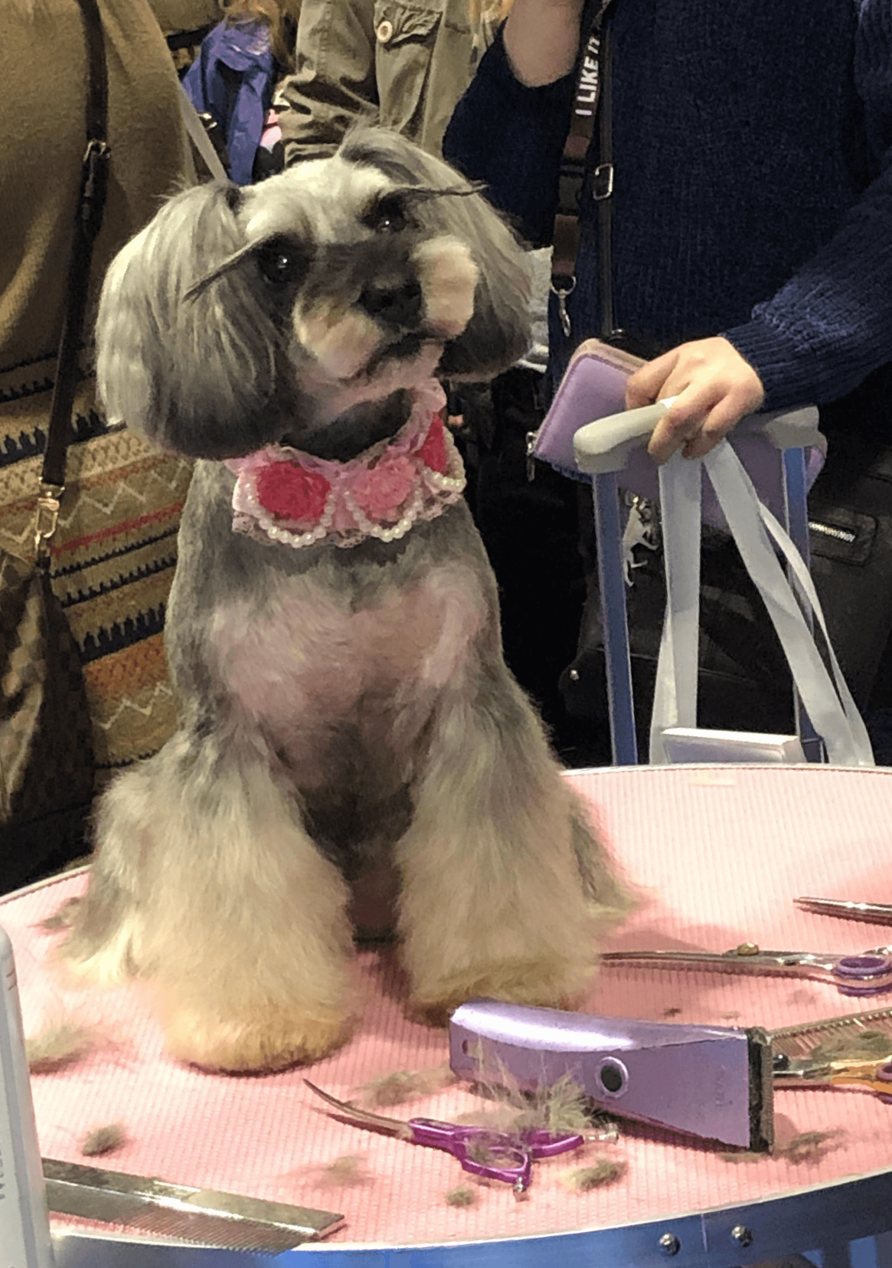 a dog behaving after grooming