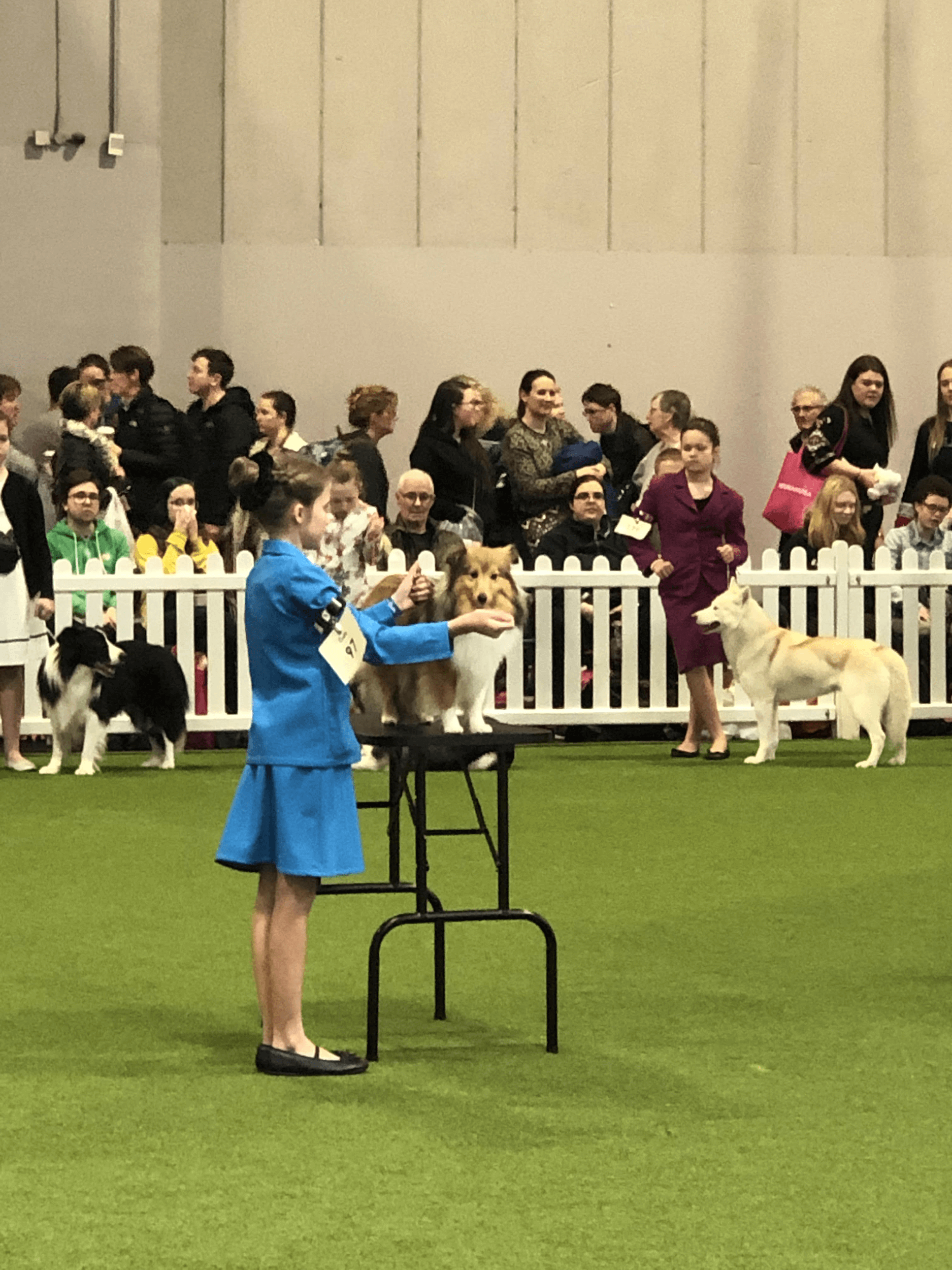 a young handler with a dog preparing for the competition