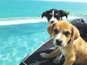Potcake Place: Ideal Vacation Combo of Puppies and Tropical Beaches