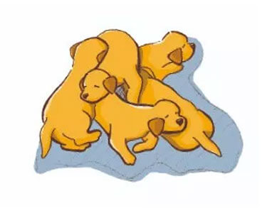 dogs sleeping positions - 9